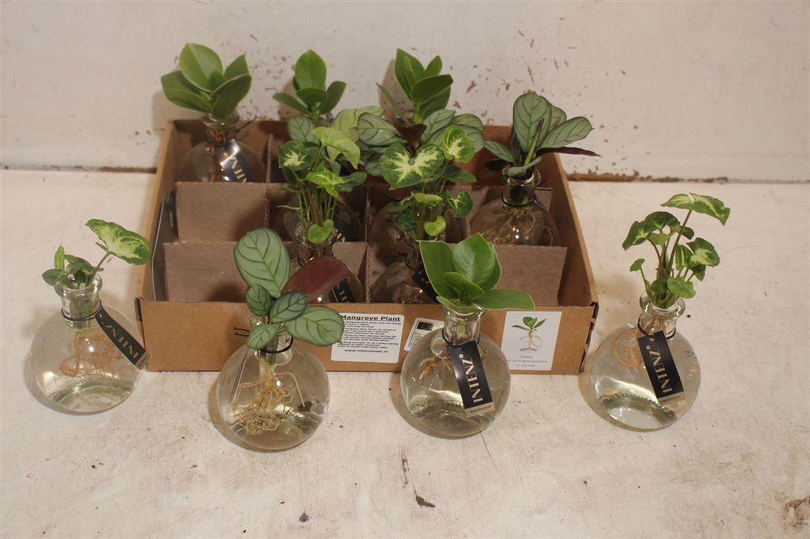 waterplantje