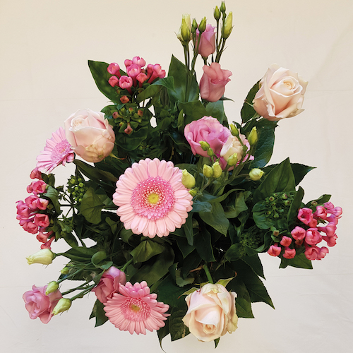 Roze Barvardia